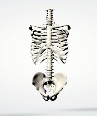 The Outline of the Spine Defining Back Pain
